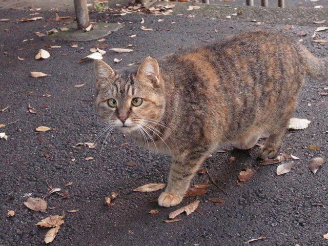 西船橋にて 人慣れした猫