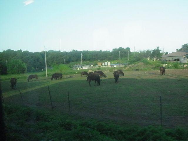 馬が見えた