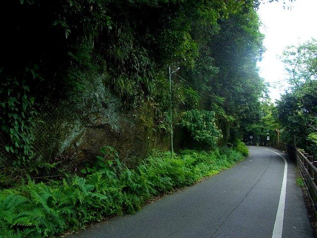 犬山城 北側の絶壁露頭 2017 年 8 月