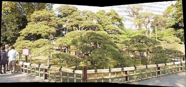 浜離宮パノラマ 三百年の松