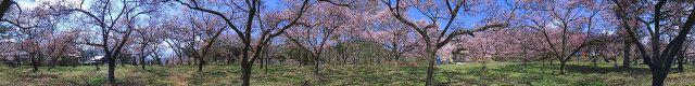 高遠城パノラマ