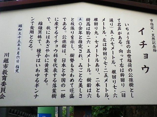 出世稲荷のイチョウ(埼玉県川越市)