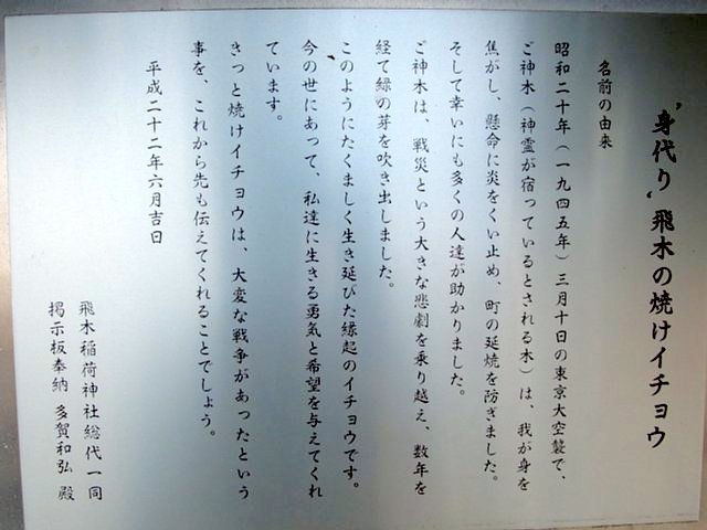 飛木稲荷の身代わり焼けイチョウ(墨田区)