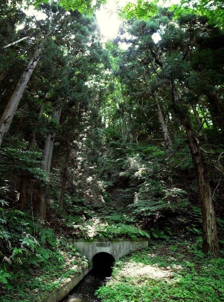 戸ノ口堰洞窟(飯盛山弁天洞窟) 流入口