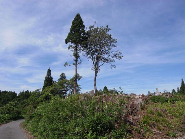 戸ノ口原古戦場跡から十六橋への道