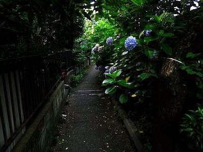 阿佐ヶ谷の暗渠