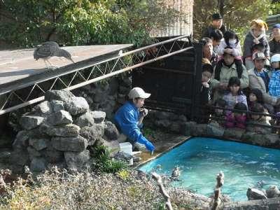 フェニックス動物園。ペンギンのエサやりショー