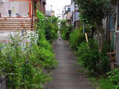 暗渠の先の猫 三郷市