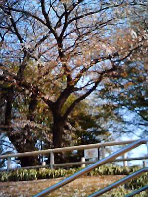 vq_2008-04-06_001.jpg
