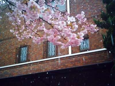 桜? vq_2009-02-27