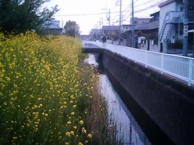 vq_2009-04-16_16