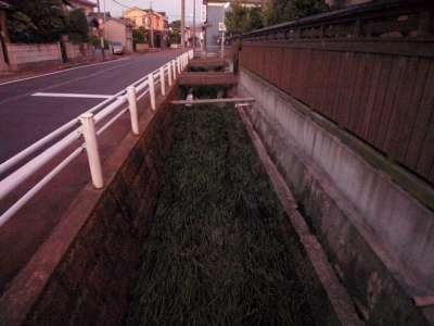 新発田城 かつての堀だろうか?