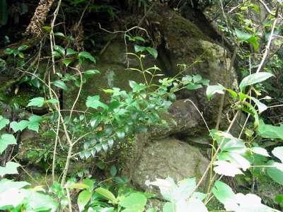犬山城 北側の斜面 石垣の痕跡 2017 年 8 月