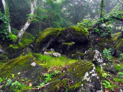 倒木のトンネル