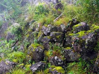 句碑のある場所の石垣