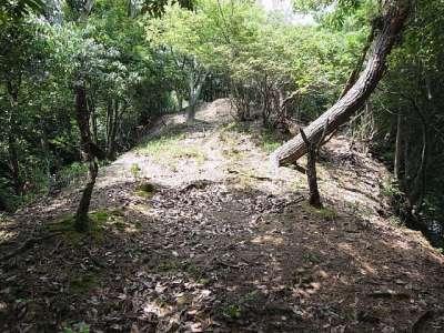 田和城(兵庫県養父市大屋) 堀切の東側の曲輪