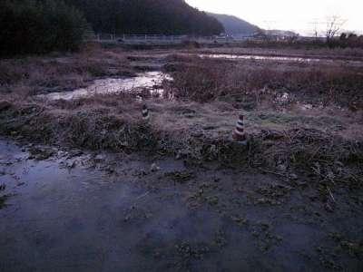 備中高松の水田