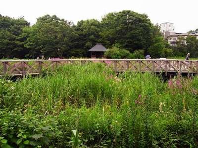 神代水生植物園