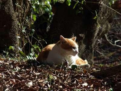 韮山城址の猫