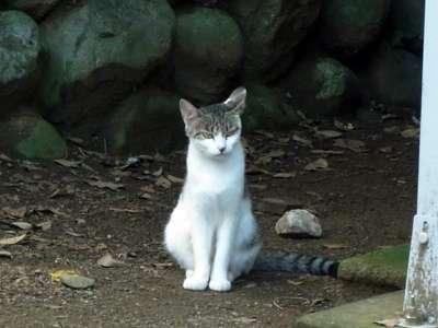 川越城 本丸御殿近くで見た猫