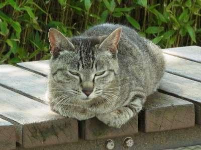 難波田城公園にいたネコ
