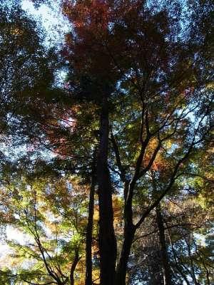 平林寺 睡足軒の森