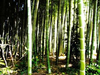 平林寺 睡足軒の森 HDR風