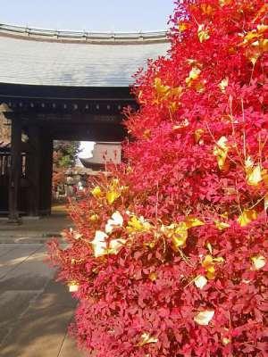 正福寺 2010-11-28