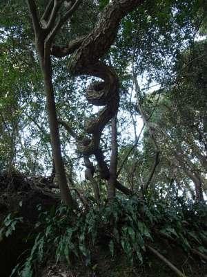 本庄の石仏(宮崎県国富町) 奇樹