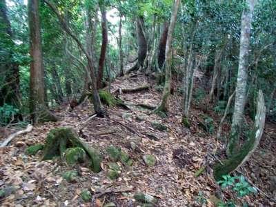 吹山の高野槙への山道