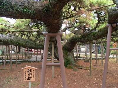 善養寺 影向の松(東京都江戸川区)
