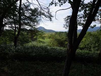 赤井谷地沼野植物群