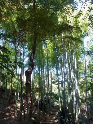 等々力渓谷 日本庭園 竹林