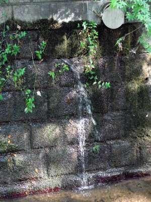 等々力渓谷 湧水