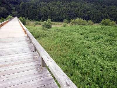 蓬莱橋から見る大井川 右岸