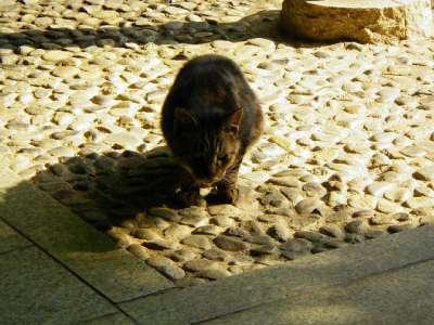 甘泉園公園の猫