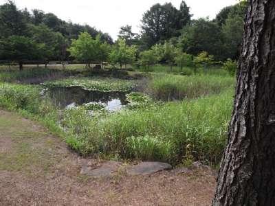 会津レクリエーション公園 月見が池